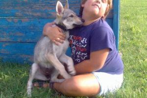 cane lupo cecoslovacco zara d.V.A. 0005