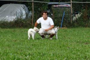 pastore svizzero bianco dexter 0083